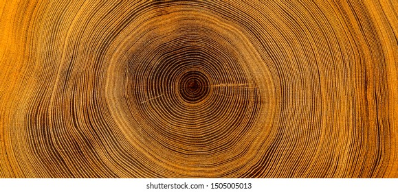 Old wooden oak tree cut surface. Detailed warm dark brown and orange tones of a felled tree trunk or stump. Rough organic texture of tree rings with close up of end grain. - Shutterstock ID 1505005013