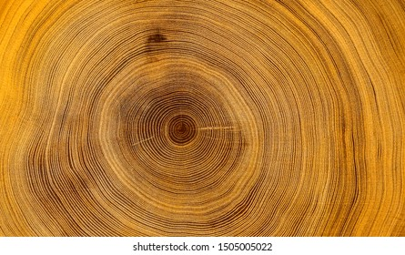 Old wooden oak tree cut surface. Detailed warm dark brown and orange tones of a felled tree trunk or stump. Rough organic texture of tree rings with close up of end grain. - Shutterstock ID 1505005022
