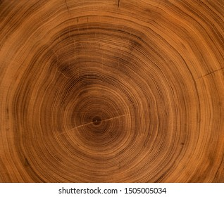 Old wooden oak tree cut surface. Detailed warm dark brown and orange tones of a felled tree trunk or stump. Rough organic texture of tree rings with close up of end grain.