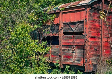 Old wooden railway wagon captured by vegetation.