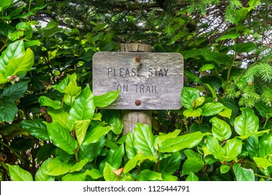 """Old wooden signpost surrounded by vegetation with the carved text """"Please stay on trail""""."""