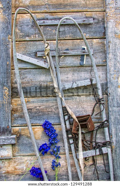 Old Wooden Snow Shoes Leaning Against Rustic Building With Purple Flowers