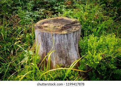 old wooden stump among green grass