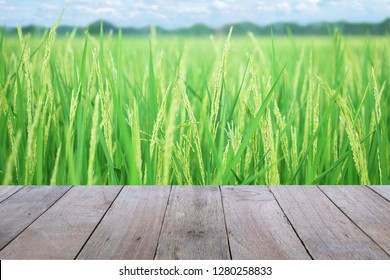 Old wooden table foreground with ear of paddy, Golden Rice Field, with sky and clouds background, empty space Place a Rice products. Nature and health concept.