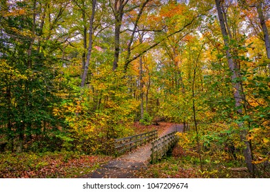 Old wooden walking bridge across a small stream in a Maryland forest during Autumn with Fall leaves on the ground