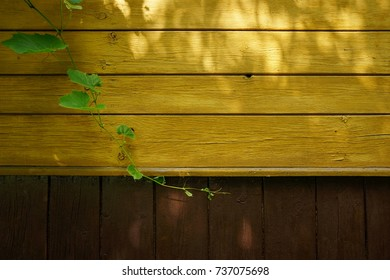Old wooden wall with grapevine and sunlight