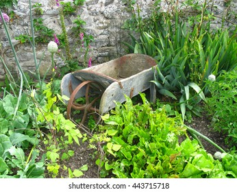 old wooden wheelbarrow surrounded by plants in a garden.