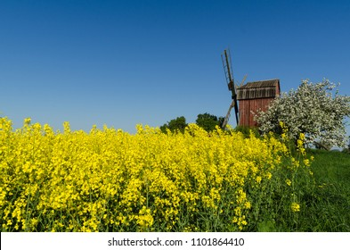 Old wooden windmill by blossom rapeseed field and apple tree at the swedish island Oland