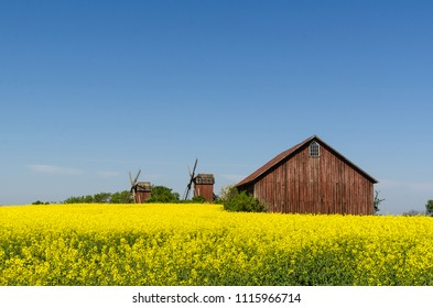 Old wooden windmills and a barn by a blossom rapeseed field at the swedish island Oland