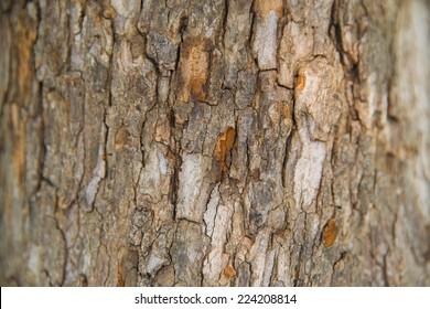Old Wood(rind,bark) Tree Texture Background Pattern,Tree bark texture,