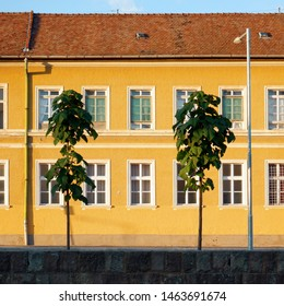 old yellow house with windows