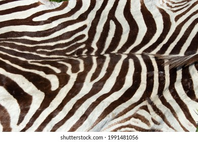 An old zebra skin or pelt at sale at a second-hand car boot fair.