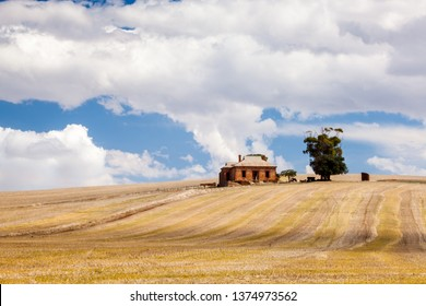 Old/abandoned brick homestead with cattle in the rural countryside of South Australia, a short drive outside of Adelaide.