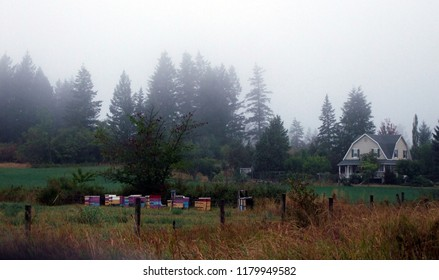 Olden style farm house situated in a meadow with a cluster of trees in the rear and honey bee hive boxes in the front.