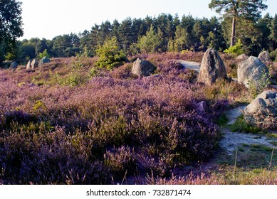 Oldendorf deathcity with nordic megalith architecture (Funnelbeaker culture) in  luneburg heath north germany