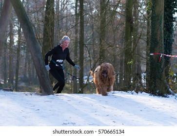 OLDENZAAL, NETHERLANDS - JANUARY 22, 2017: Dog and  unknown owner running in a snowy forestl during a canicross contest