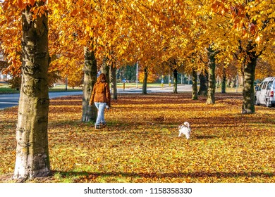 OLDENZAAL, OVERIJSSEL / NETHERLANDS - NOVEMBER 21 2013: Woman with dog walking under trees with falling leaves in autumn colors.