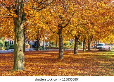 OLDENZAAL, OVERIJSSEL / NETHERLANDS - NOVEMBER 21 2013: Municipal employees rake autumn leaves from walking path.