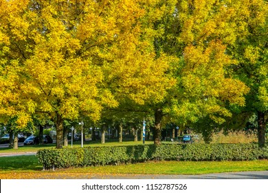 OLDENZAAL, OVERIJSSEL / NETHERLANDS - SEPTEMBER 24 2017: Autumn city scape with trees and falling leaves.