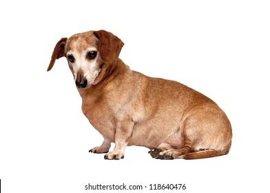 Older Dog Sitting