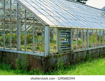 Older glass greenhouse filled with plants.