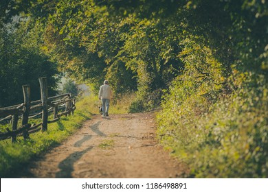 Older person taking a stroll with a dog on a fire road on countryside in evening hours with soft warm sun. Path, trees and wooden fence are visible.