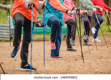 Older women go Nordic walking with sticks in coniferous forest, concept that is good for fitness.