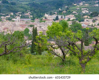 olea buis les baronnies in drome, in france