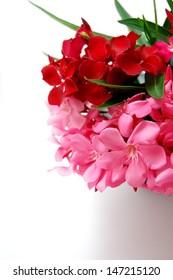 Oleander bloom 1