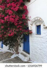 OLEANDER PINK FLOWERS GREECE AEGEAN SEA MEDITARRANEAN GREEK BLU WHITE