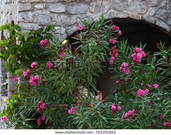 Oleander stone house