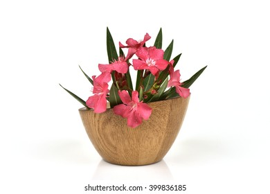 Oleander, Sweet Oleander, Rose Bay (Nerium oleander L.) plants, herbs have medicinal properties, and the plant is poisonous oleander leaves used as rat poison and insecticides.