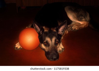 olimpus digital camera German Shepherd boy lies on the floor with an orange ball. photo in the style of Caravaggio