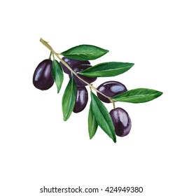 olive branch with black berries. isolated. hand painted watercolor