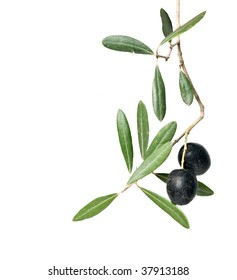 olive branch with fruits isolated on white background