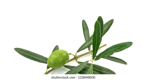 Olive branch with green olives, isolated on white background