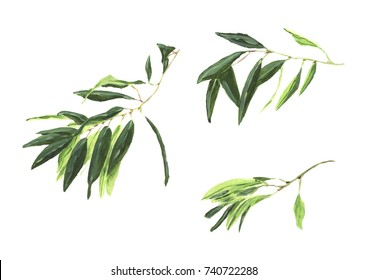 Olive branch isolated on white background with olives.