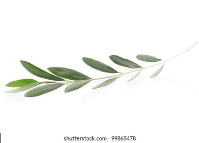 Olive branch and leaves isolated on white, clipping path included
