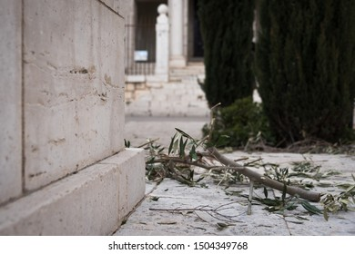 Olive Branch on the ground after the Holy Week