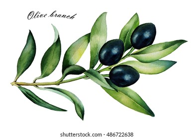 Olive branch with ripe black olives. Isolated on a white background. Watercolor