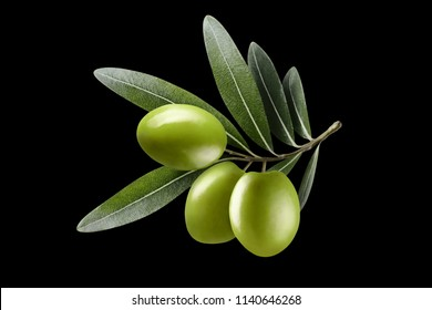 Olive branch with three green olives, isolated on black background