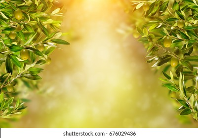 Olive branches background, ready for product placement. Copyspace, high resolution image