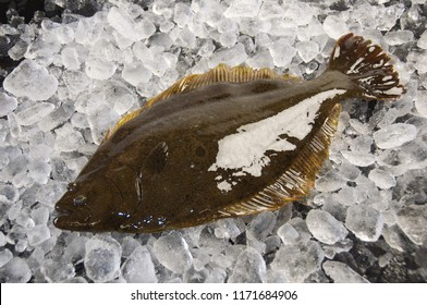The olive flounder, bastard halibut or Japanese halibut is a temperate marine species of large-tooth flounder native to the north-western Pacific Ocean.