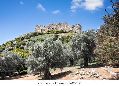 Olive grove against a hill with lock Nimrod ruins, Israel