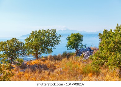 Olive grove, dried grass, sea and mountains