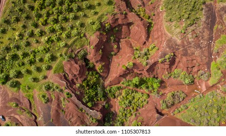 an olive grove on the edge of a red earth canyon