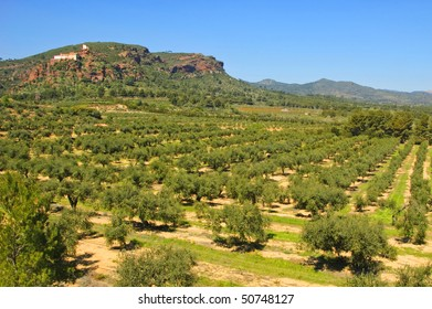 olive grove with the shrine of the Virgin de la Roca in the background, in Mont-roig, Tarragona