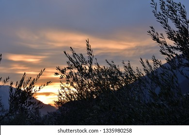 Olive grove at the sunset: union between heaven and earth. View of Valtellina sky from an olive grove.