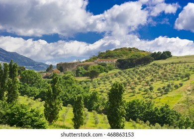 Olive Groves on the Sloping Hills of Sicily in Italy