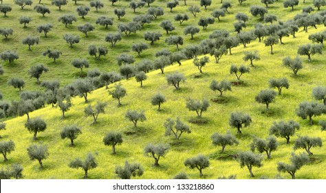 Olive Garden Images, Stock Photos & Vectors | Shutterstock